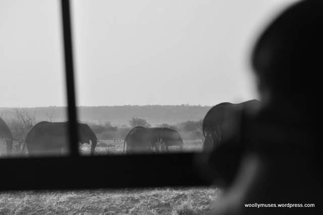 elephants_0021