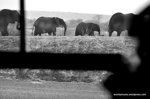 elephants_0022