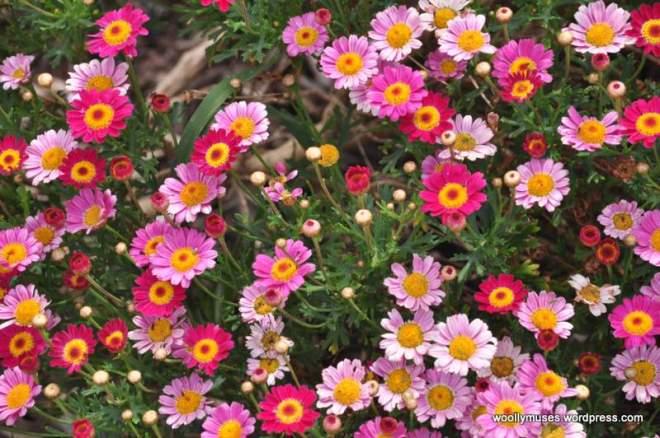garden_0512