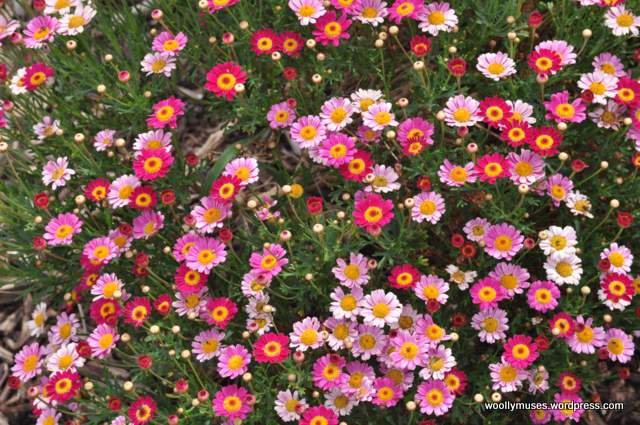 garden_513