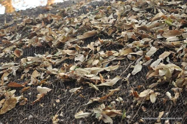 leaves_0118
