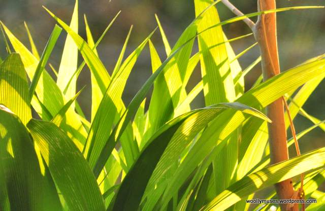 leaves_0123