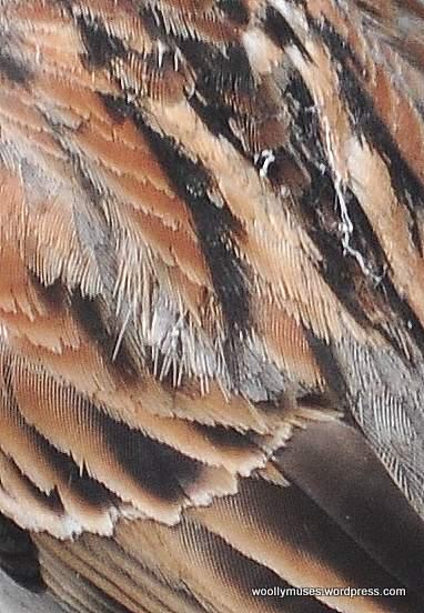 sparrow_0602a