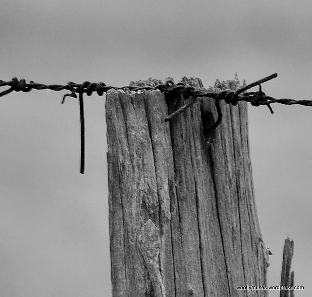 fence_0039