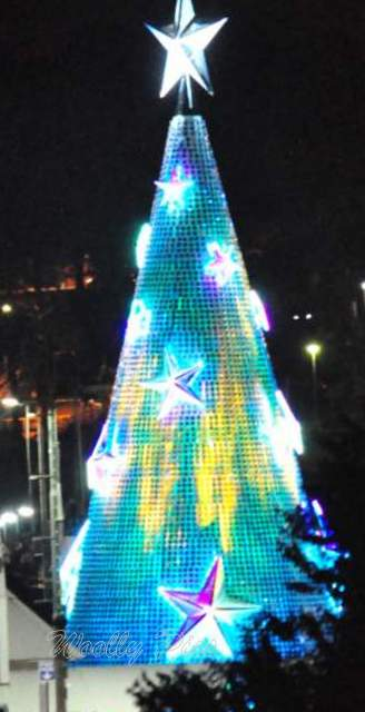 Geelong Floating Christmas tree_0691