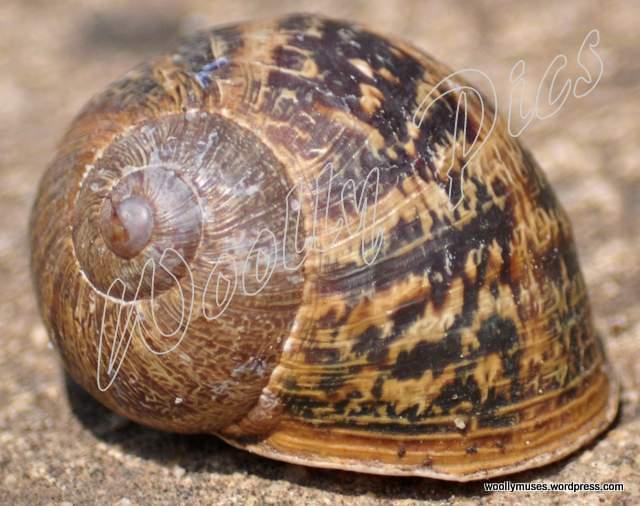 snail_0570