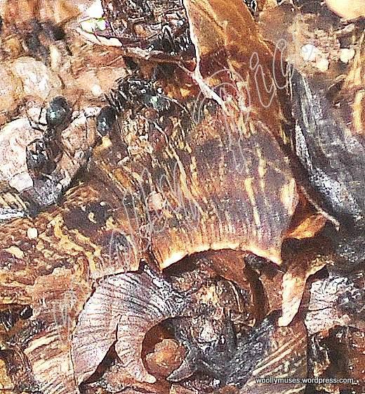 snail_0575