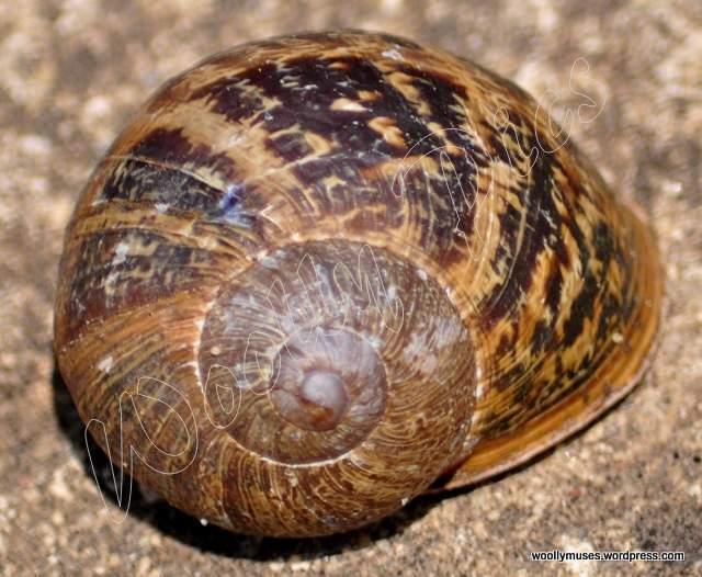 snail_0576