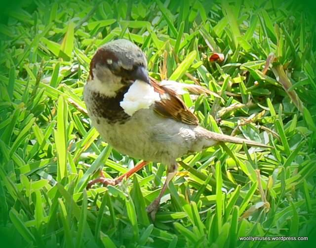 sparrow_2376
