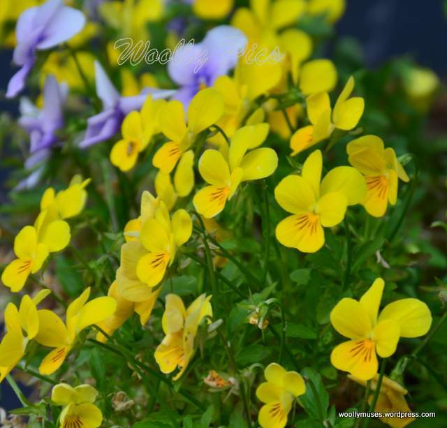 yellow_2301a