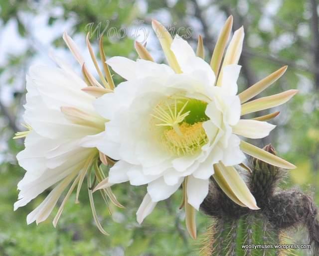 cactus_0004