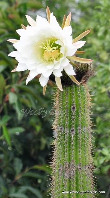 cactus_0006