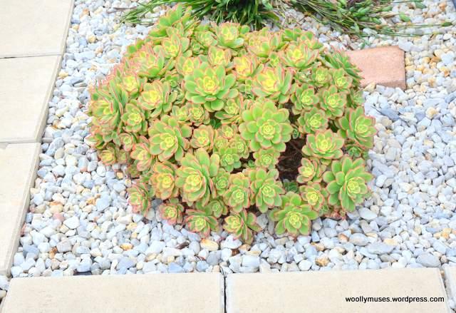 cactus_3962