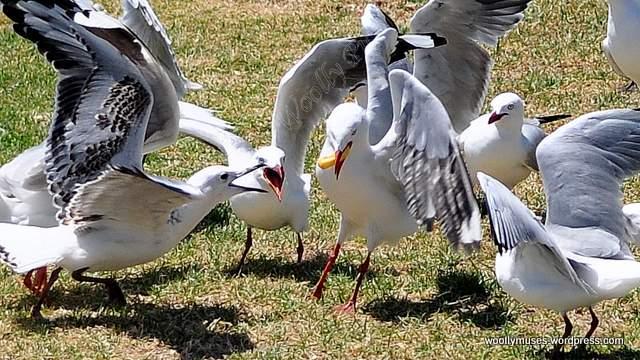 seagull_0666