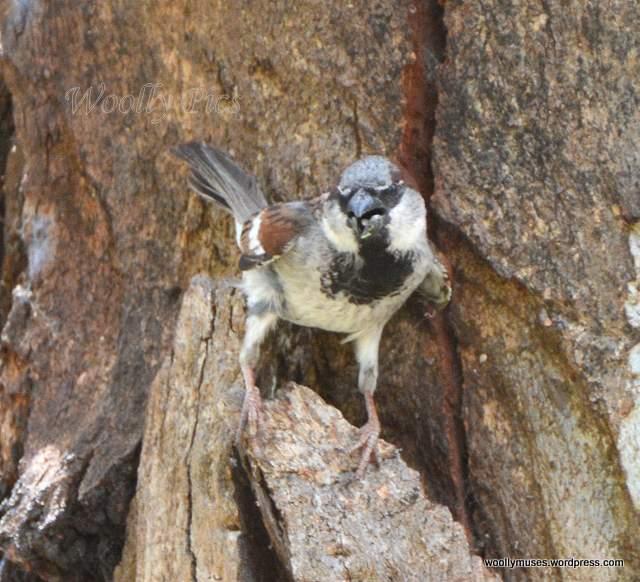 sparrow_2879