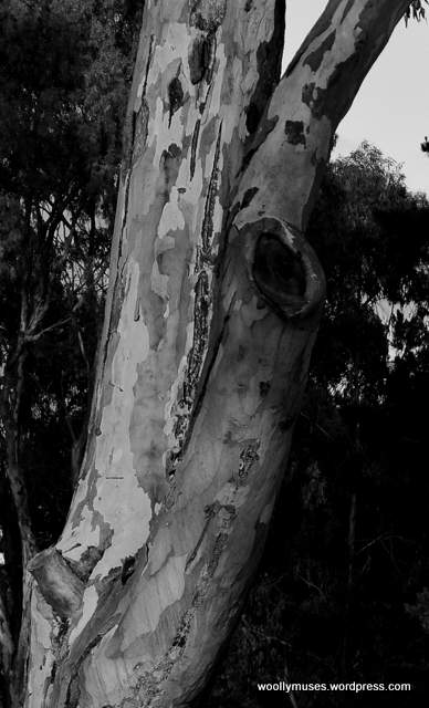 tree_4103