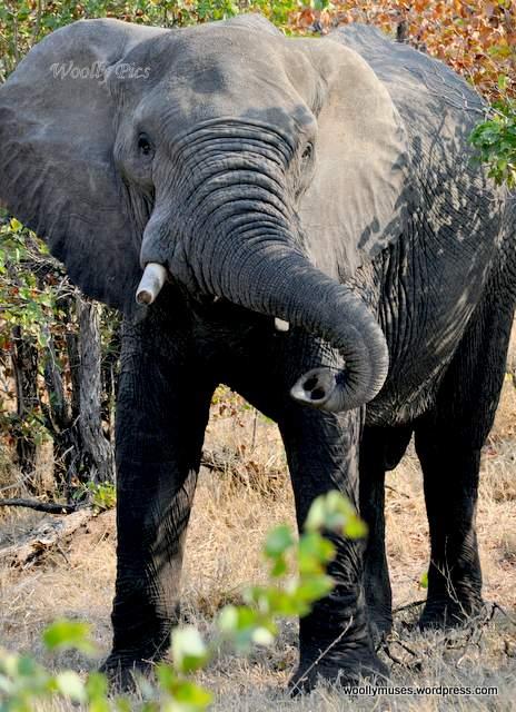 elephant_0637