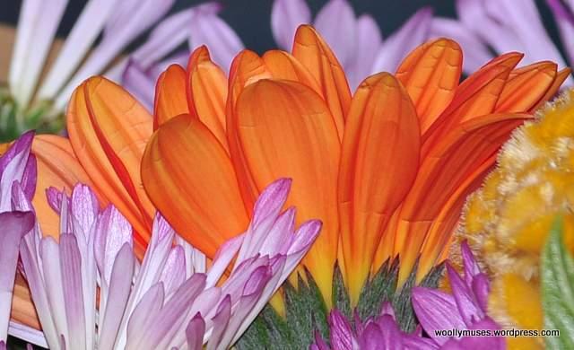 flower_0012