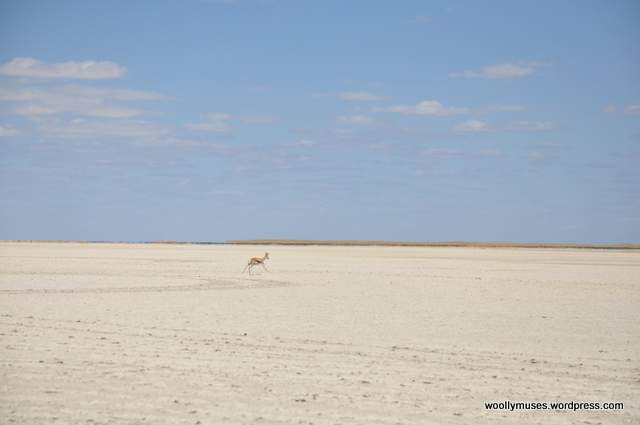 Kalahari-salt-pan_0507