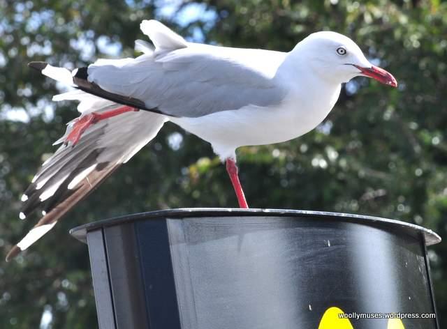 seagull_0028