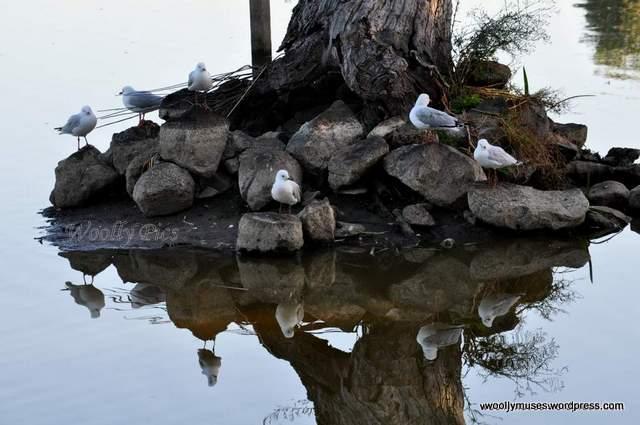 seagull_0939