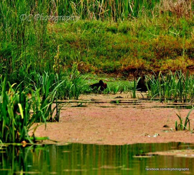 wetland_0026