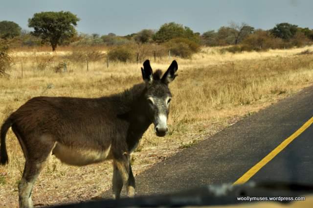 donkey_0216
