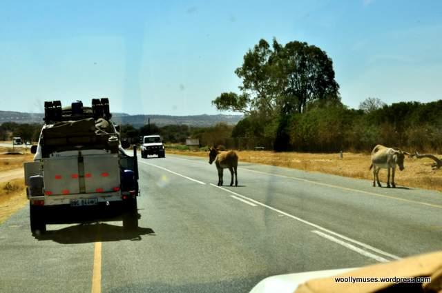 donkey_0255