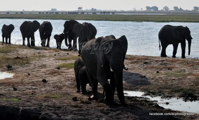 elephants_0059