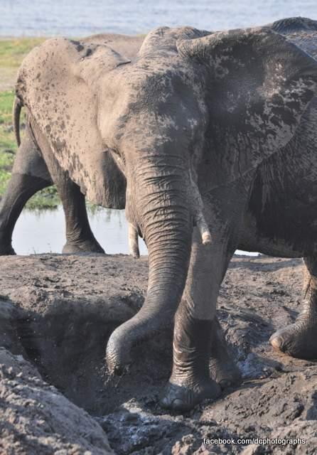 elephants_074