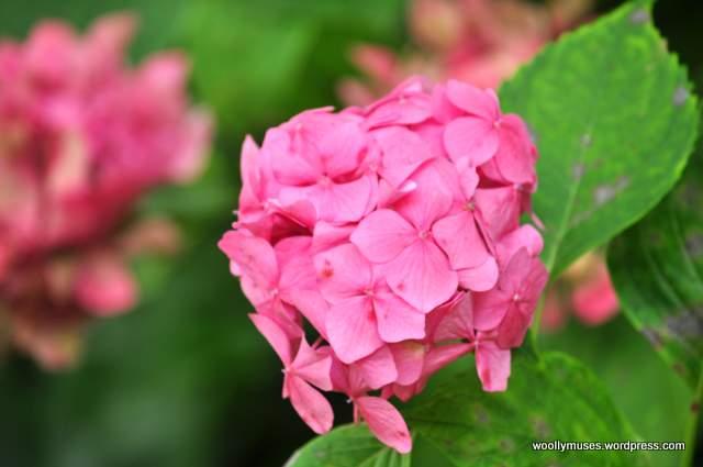 flower_0086