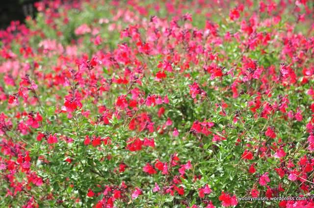 flower__0093
