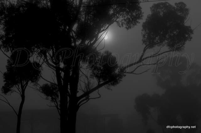 fog_001