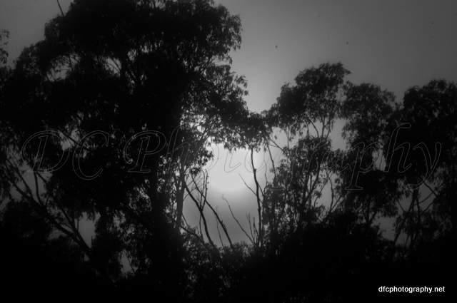fog_008