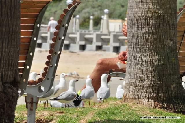seagull_0022