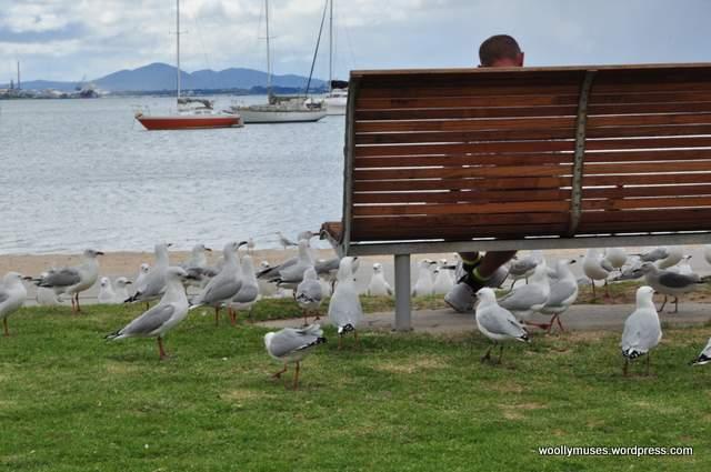 seagull_0043