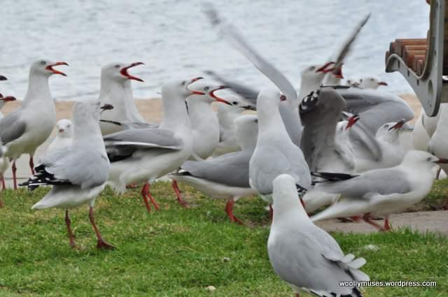 seagull_0044