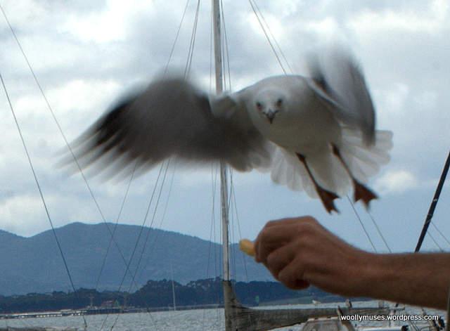 seagull_0068