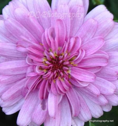 Flower_1868