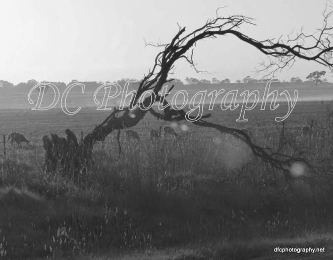landscape_5738