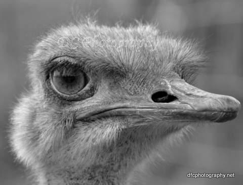 ostrich_0428