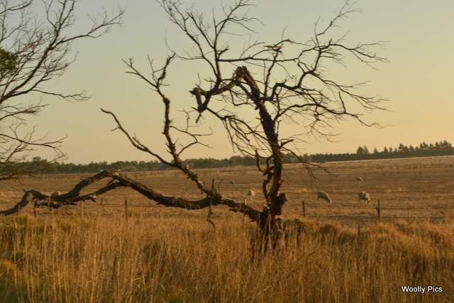 tree-blur_5749
