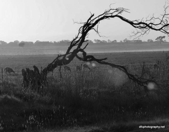 tree_5738