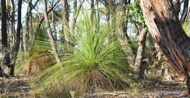 grass_tree