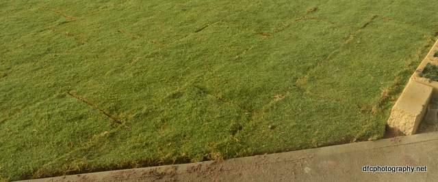 lawn_6073
