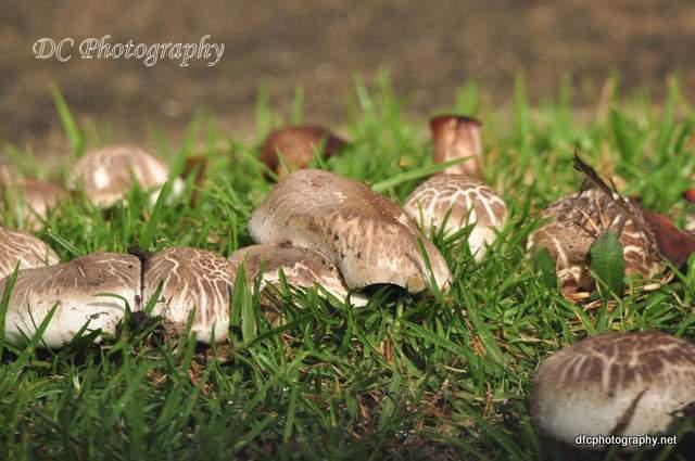 mushroom_0198