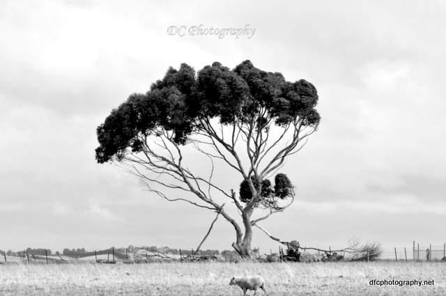 tree_0021