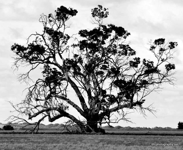 tree_0033