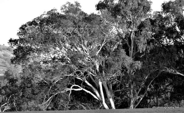 tree_0074abBW
