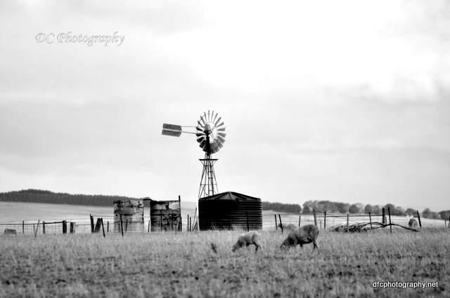 windmill_019